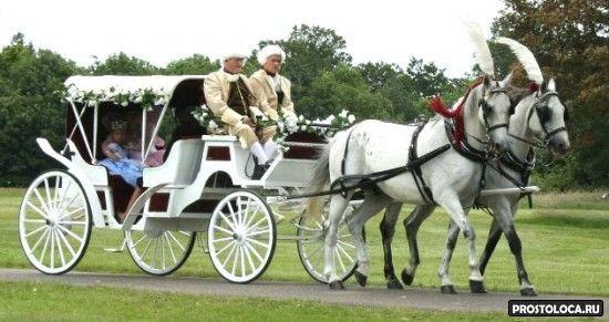 свадебная карета с лошадьми