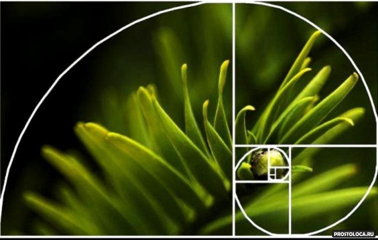 спираль фебоначчи на фотографиях