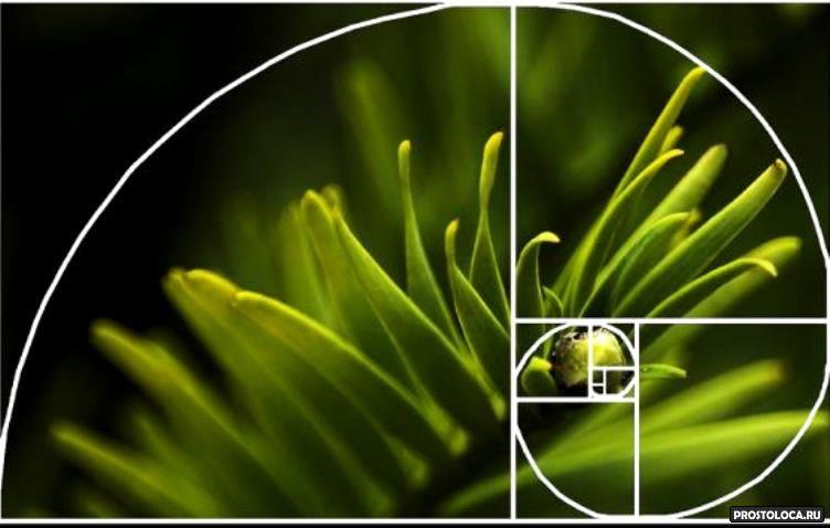 работает правило, спираль фибоначчи и золотое сечение в фотографии потанин награжден помощь