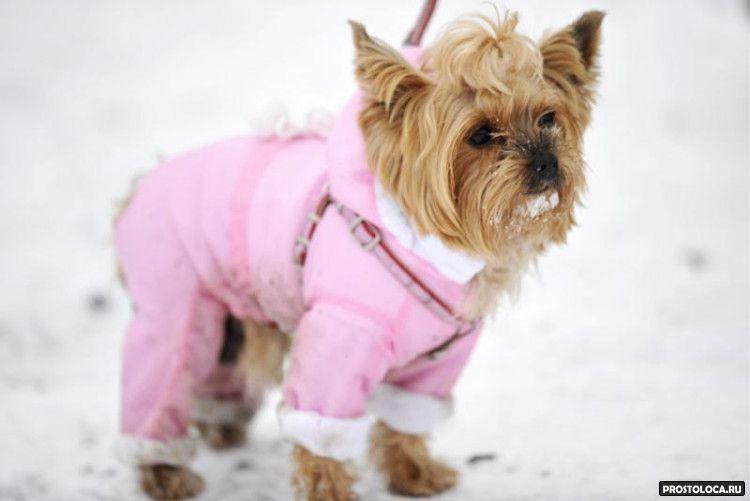 размеры одежды для собак 2