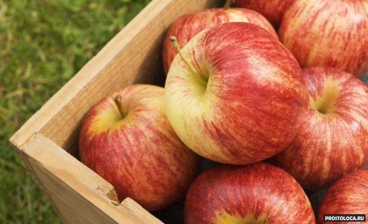 самые полезные фрукты 6
