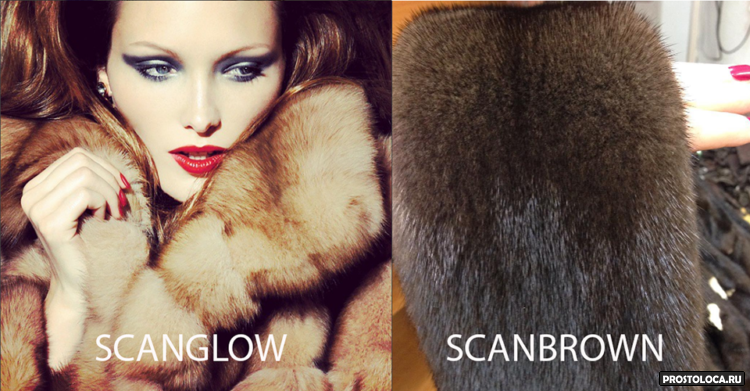 scanglow
