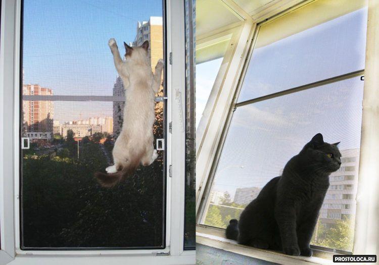 Выбор и крепление сетки на окно для защиты от кошек