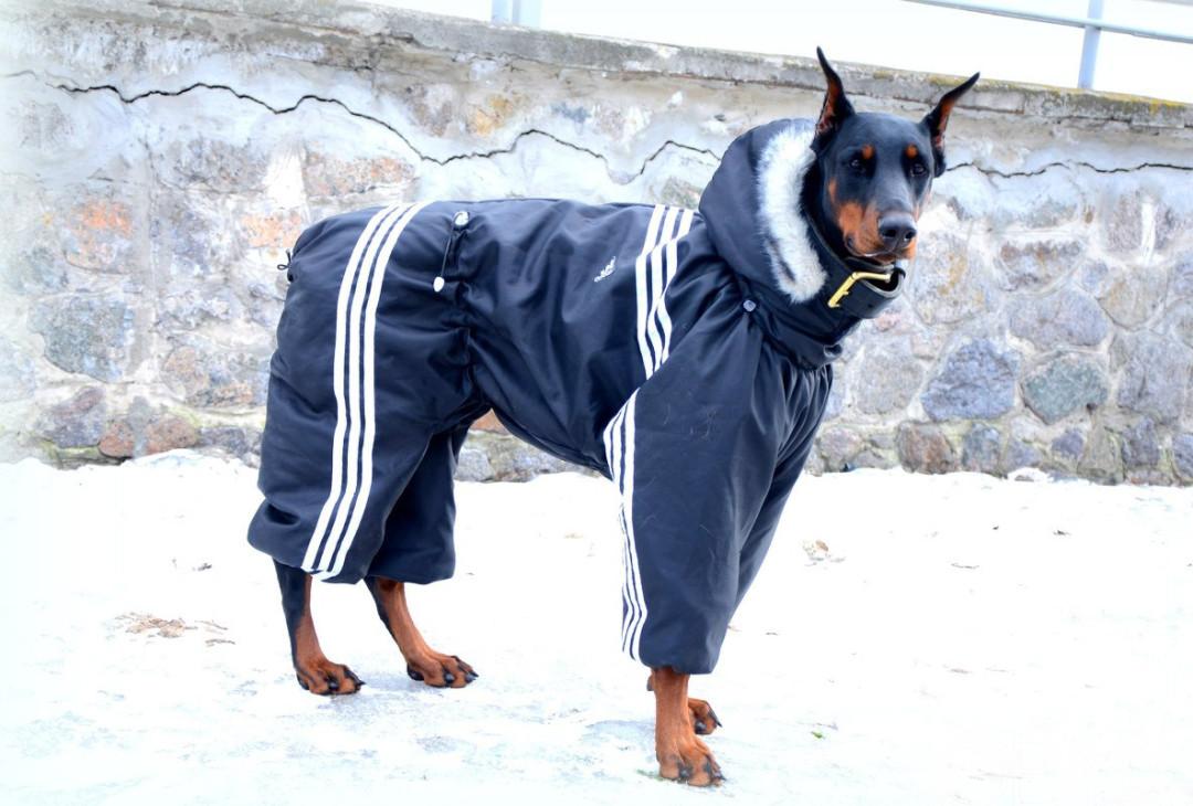 размеры одежды для собак 4