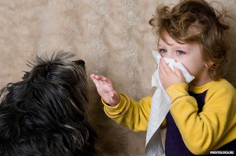 гипоаллергенные породы собак 4